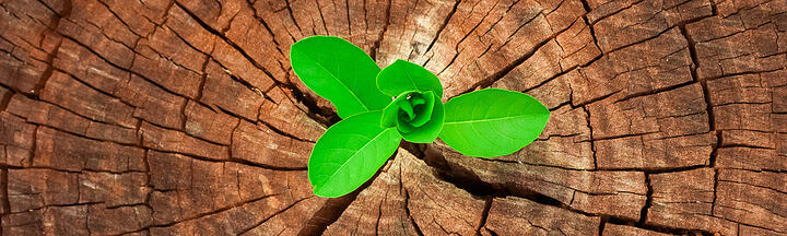 How to Increase Sustainability With Managed Print Services